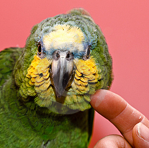 Man And Parrot Stock Images - Image: 8622604