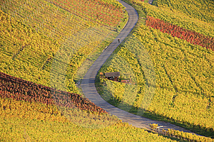 Colorful Autumn Vineyard Royalty Free Stock Images - Image: 8623419