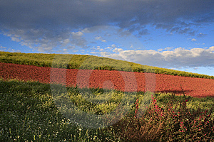 The Red Soil Of Dongchuan Stock Image - Image: 8623951