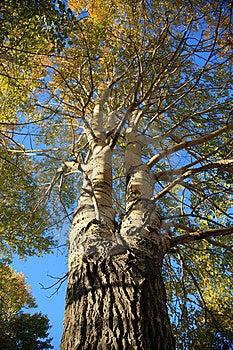 Drzewo Zdjęcie Royalty Free - Obraz: 8624115
