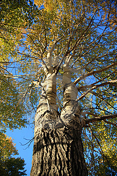 Baum Lizenzfreies Stockfoto - Bild: 8624115