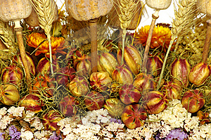 Dry Flowers Royalty Free Stock Photography - Image: 8625607