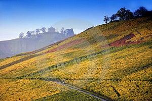 Colorful Autumn Vineyard Stock Image - Image: 8625801