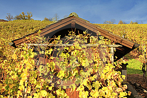 Colorful Vineyard Stock Photo - Image: 8625870