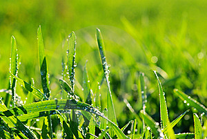 Drops On Grass Stock Photography - Image: 8626422