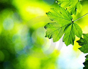Green Leaves Royalty Free Stock Photo - Image: 8626455