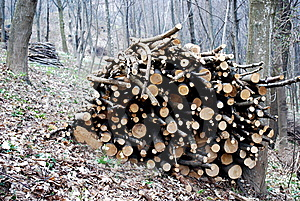Stacked Logs Royalty Free Stock Photo - Image: 8627615
