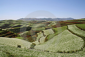 The Red Soil Of Dongchuan Royalty Free Stock Photos - Image: 8629058