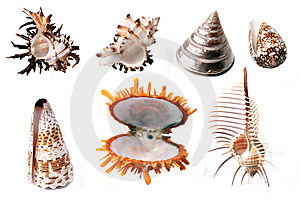 Shells Stock Photos - Image: 8630173