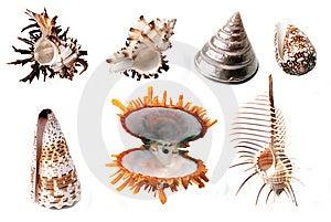 Shells Stock Photos - Image: 8630173