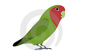 Lovebird Royalty Free Stock Photo - Image: 8630395