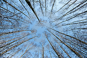 Trees Crown Stock Photo - Image: 8631390