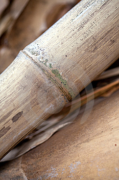 Bamboo Stalks Royalty Free Stock Images - Image: 8632349