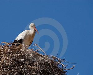 Cigogne Turque Photographie stock libre de droits - Image: 8632707