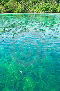 Fish In Clear Water. Stock Photos - Image: 8634243