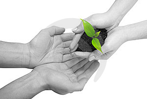 Plant between hands Royalty Free Stock Photo