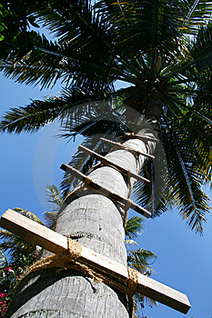 Palm Stock Photo - Image: 8635380