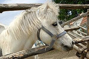 White Horse Portrait Royalty Free Stock Photo - Image: 8636535