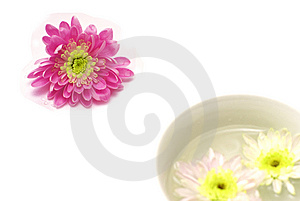 Aroma And Elegance Of Chrysanthemums Stock Photos - Image: 8636903