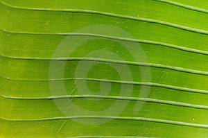 Green Leaf Stock Photography - Image: 8637072