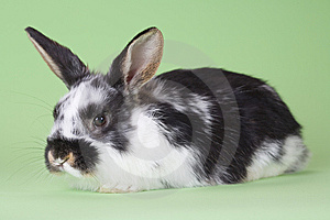 Bunny που απομονώνεται που &epsilon Στοκ Εικόνες - εικόνα: 8637744