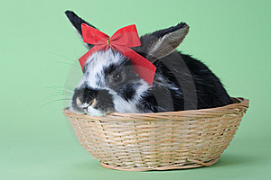 Spotted Bunny With Red Bow Tie, Isolated Stock Image - Image: 8637801