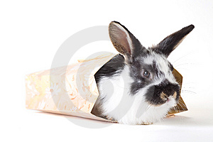 Spotted Bunny In The Bag, Isolated Stock Images - Image: 8637834