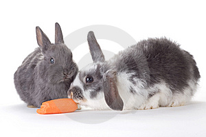 Two Bunny And A Carrot, Isolated Royalty Free Stock Image - Image: 8637956