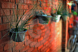 Pot On The Red Brick Wall Royalty Free Stock Photo - Image: 8638345