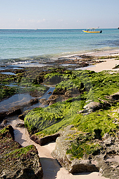 Moss On Beach Rocks Royalty Free Stock Images - Image: 8639669