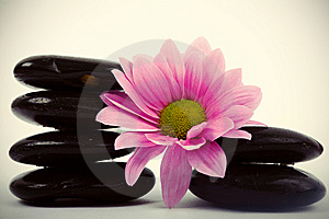 Stones And Flower Royalty Free Stock Image - Image: 8640166