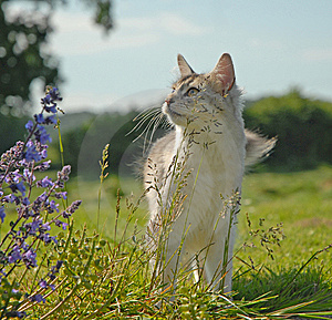 Country Cat Royalty Free Stock Photography - Image: 8640657