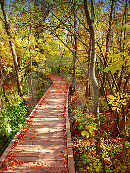 Wooden Path Stock Image - Image: 8640691