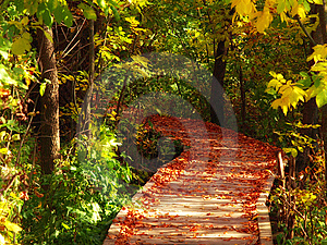 Wooden Path Royalty Free Stock Photo - Image: 8640845