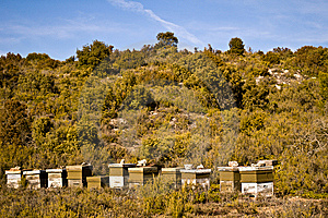Beehives Royalty Free Stock Photography - Image: 8640927