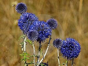 Desert Flower Stock Photos - Image: 8641083