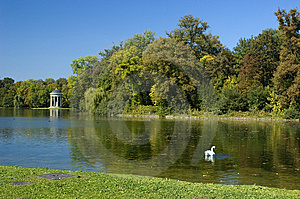 Summer Lake With Swan Stock Photography - Image: 8642452