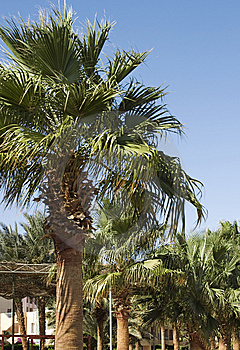 Palms In Hotel Stock Photo - Image: 8642460
