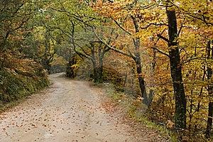Autumn Colors Stock Photo - Image: 8643380