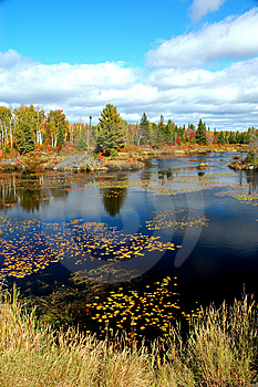 Pond With Water Lillies In The Fall Royalty Free Stock Photos - Image: 8643798
