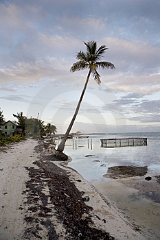 Lone Palm On The Beach Stock Photography - Image: 8644212