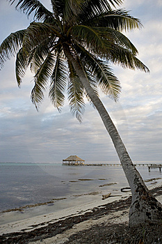 Lone Palm And Pier On The Beach Stock Images - Image: 8644214