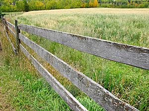 Fence And Oat Field Stock Images - Image: 8645294