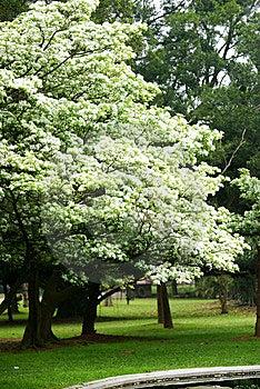 Beautiful Garden Stock Photos - Image: 8646603
