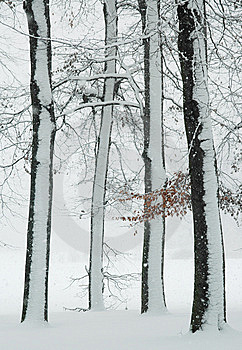 Winter Trees Stock Photo - Image: 8647250