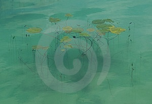 Lily Pond Royalty Free Stock Photography - Image: 8647647