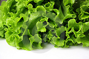 Fresh Lettuce Royalty Free Stock Photo - Image: 8649045