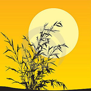 Plant Scenic Stock Image - Image: 8649171