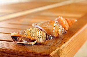 Overzeese Shells Stock Foto - Beeld: 8649360