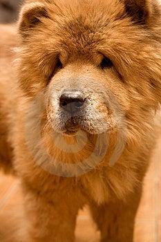 Dog Royalty Free Stock Image - Image: 8651926
